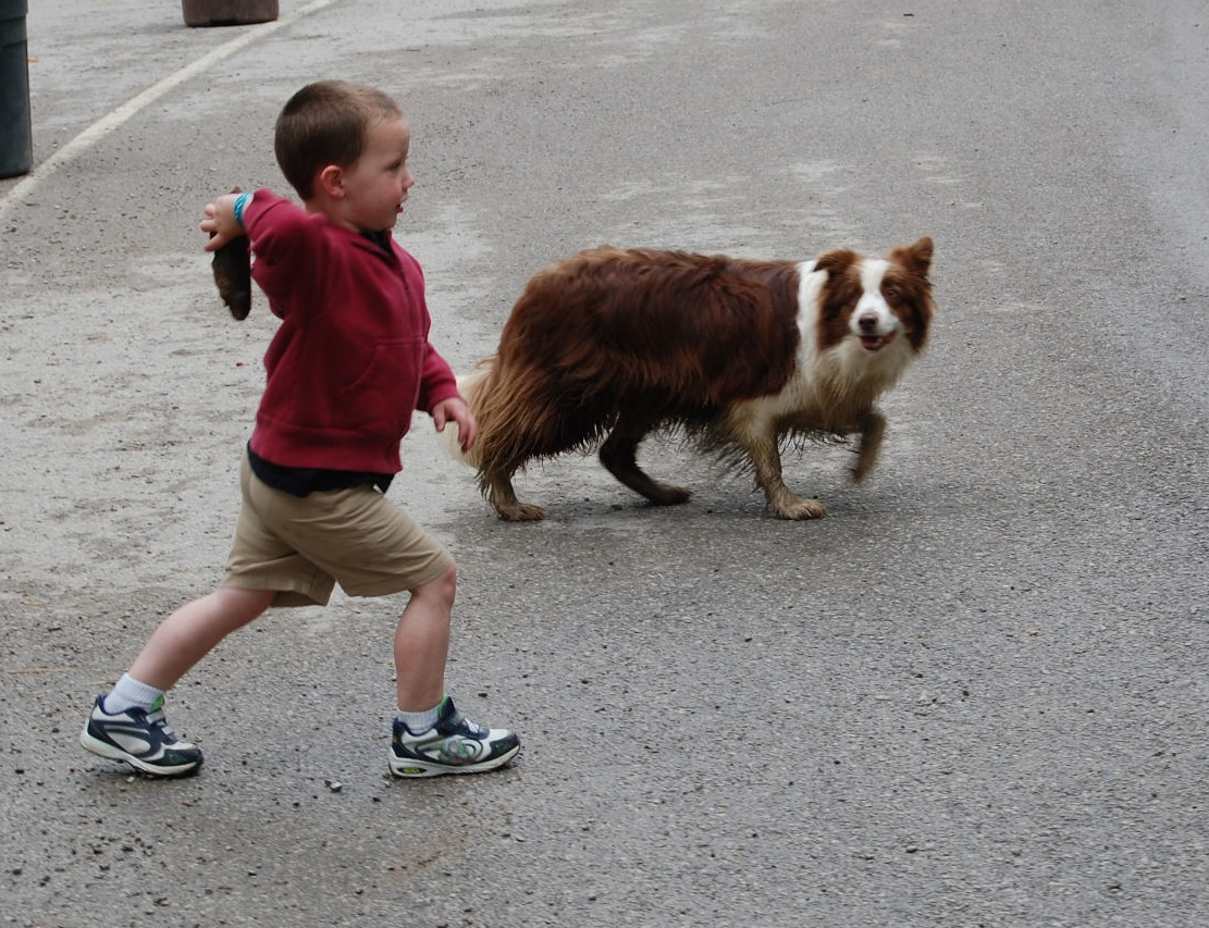Patricia A. Scheyer/Contributor Brenden Yates, 3, of Covington, throws a chunk of wood for the Rabbit Hash mayor, Lucy Lou, to fetch which is Lucy's favorite game.