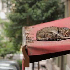 From the Melbourne Film Festival: Kedi